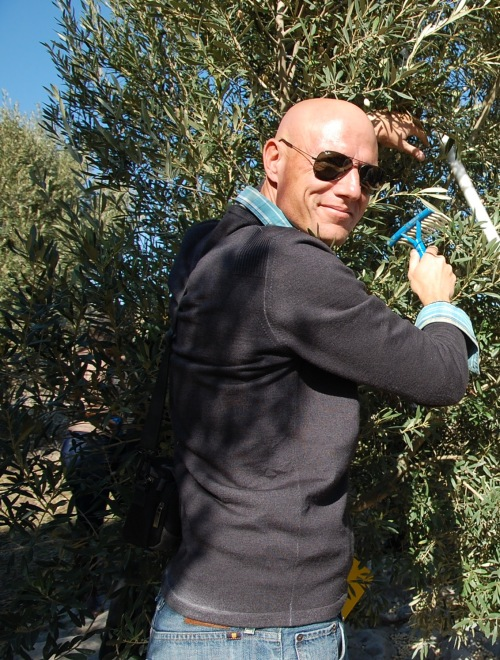 Brad picks olives as part of his work with USAID.